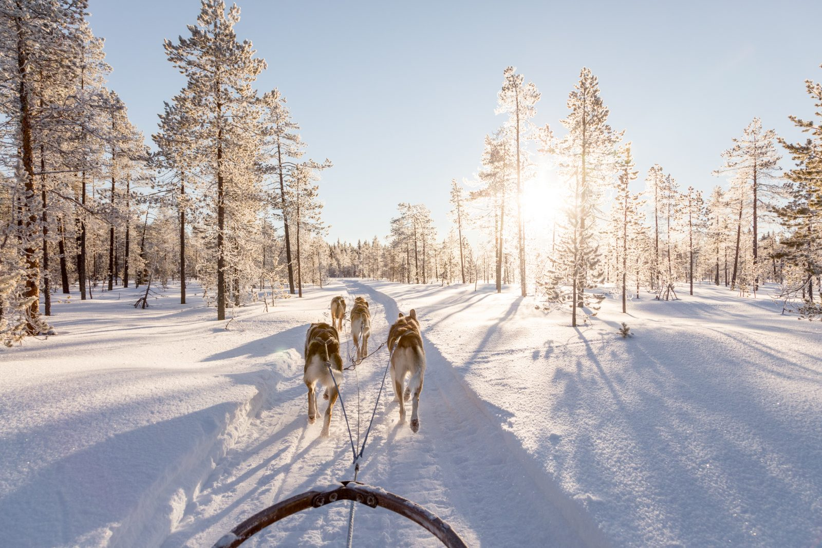 A weekend in Finnish Lapland by Wild Connections Photography